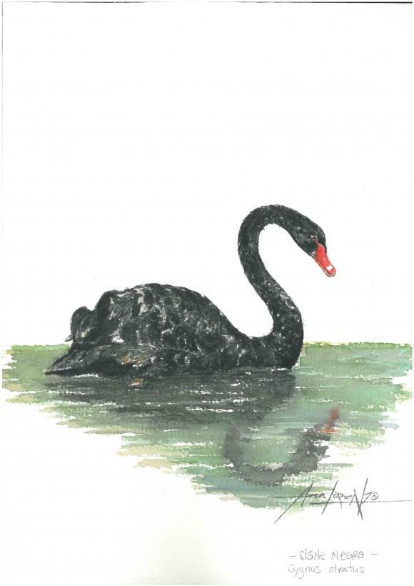 Cisne negro 2